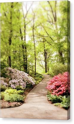 Spring Azaleas  Canvas Print