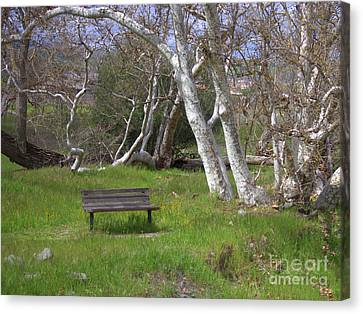 Spring Bench In Sycamore Grove Park Canvas Print by Carol Groenen