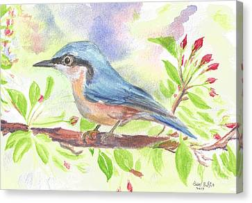 Spring Bird  Canvas Print by Isabel Proffit
