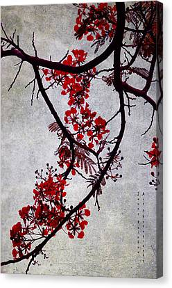 Spring Bloosom In Maldives. Flamboyant Tree II. Japanese Style Canvas Print by Jenny Rainbow
