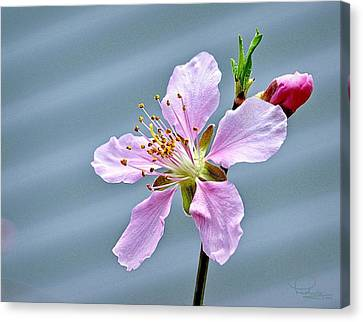 Spring Blossom Canvas Print by Ludwig Keck
