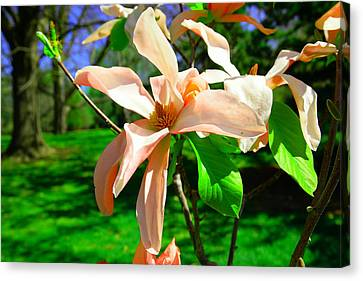 Canvas Print featuring the photograph Spring Blossom Open Wide by Jeff Swan