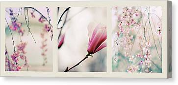 Canvas Print featuring the photograph Spring Blossom Triptych by Jessica Jenney