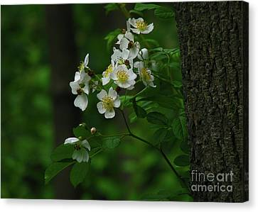 Canvas Print featuring the photograph Spring Blossoms by Deborah Johnson