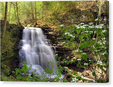 Canvas Print featuring the photograph Spring Blossoms Grace Erie Falls by Gene Walls