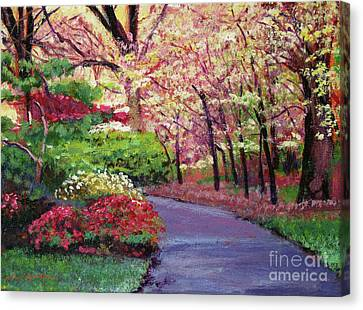 Azaleas Canvas Print - Spring Blossoms Impressions by David Lloyd Glover