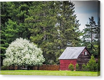 Woodpile Canvas Print - Spring Blossoms On The Farm by Paul Freidlund