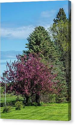 Canvas Print featuring the photograph Spring Blossoms by Paul Freidlund