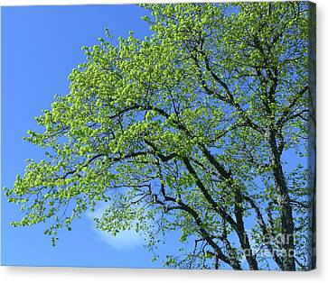 Spring Blue And Green Canvas Print by Phil Banks
