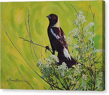 Spring Bobolink Canvas Print by Bruce Morrison