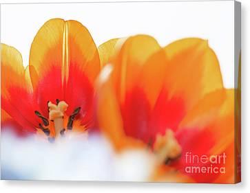 Spring Breeze Canvas Print by Afrodita Ellerman
