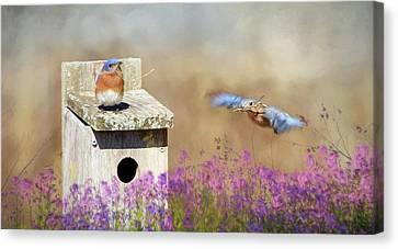 Spring Builders Canvas Print by Lori Deiter