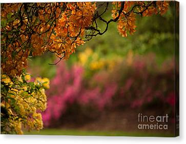 Spring Canopy Canvas Print by Mike Reid