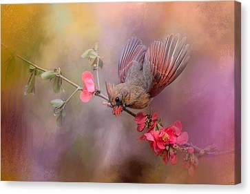 Spring Cardinal 2 Canvas Print