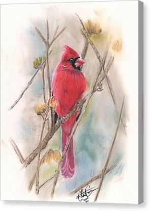 Spring Cardinal Canvas Print