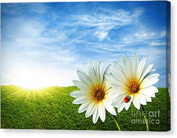 Spring Canvas Print by Carlos Caetano