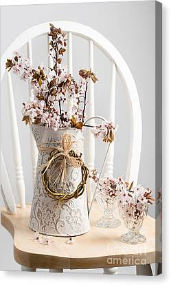 Spring Cherry Blossom On Chair Canvas Print by Amanda Elwell