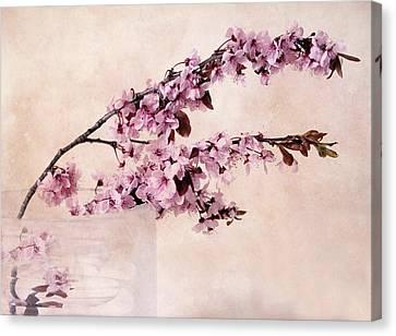 Spring Cherry Canvas Print by Jessica Jenney