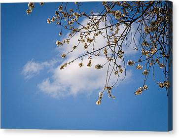 Spring Cloud Canvas Print by Andy Smy