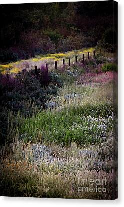 Canvas Print featuring the photograph Spring Colors by Kelly Wade