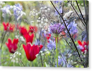 Lilacs Canvas Print - Spring Colour by Tim Gainey