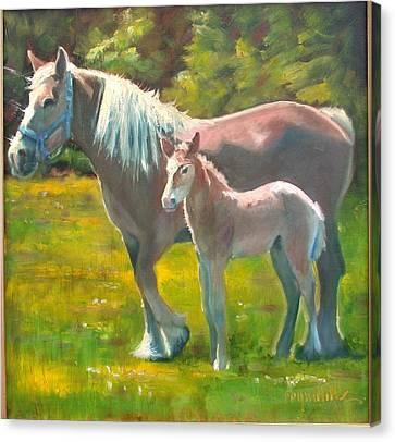 Spring Colt Canvas Print by John Reynolds