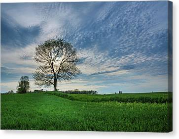 Canvas Print featuring the photograph Spring Coming On by Bill Pevlor