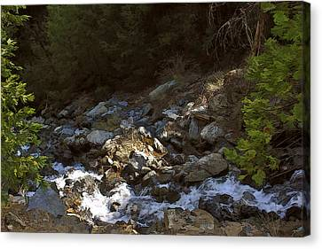 Spring Creek Canvas Print by Larry Darnell