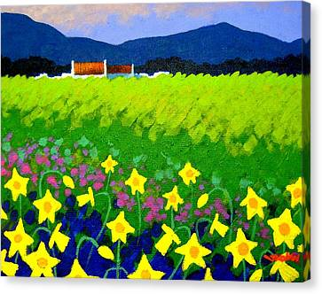 Spring Daffs Ireland Canvas Print by John  Nolan