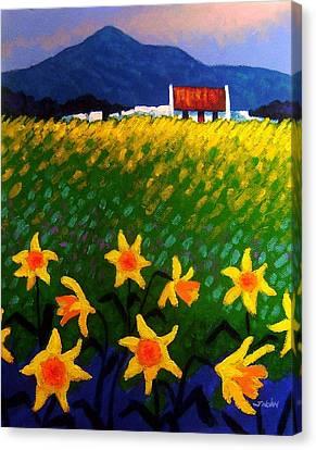 Spring Daffs  Sugar Loaf County Wicklow Canvas Print by John  Nolan