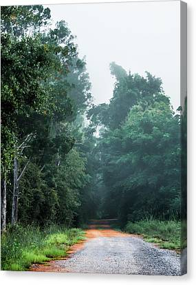 Canvas Print featuring the photograph Spring Dirt Road by Shelby Young