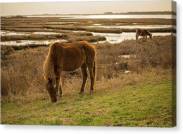 Wild Horse Canvas Print - Spring Eats by Kristopher Schoenleber