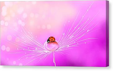 Close Up Canvas Print - Spring Elegance by Veronica Minozzi