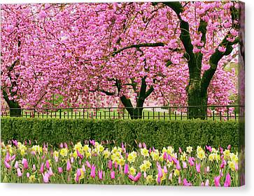 Canvas Print featuring the photograph Spring Extravaganza by Jessica Jenney
