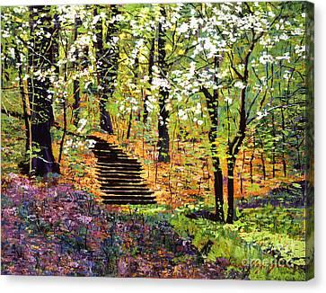 Spring Fantasy Forest Canvas Print by David Lloyd Glover