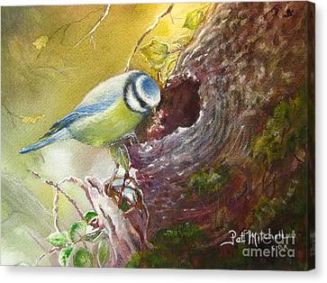 Spring Feeding Canvas Print by Patricia Schneider Mitchell