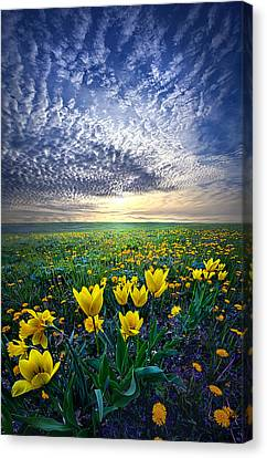 Spring Fever Canvas Print by Phil Koch
