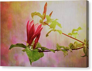 Spring Flare Canvas Print
