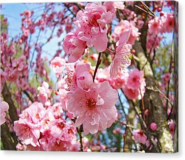 Spring Floral Art Prints Pink Tree Blossoms Canvas Print by Baslee Troutman