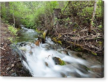 Canvas Print featuring the photograph Spring Flow by Fran Riley