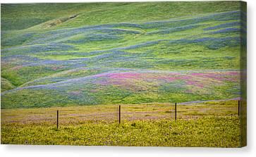 Spring Flower Bloom  Canvas Print