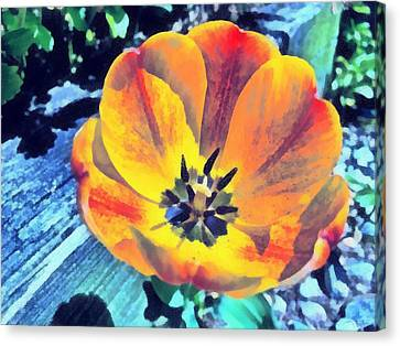 Canvas Print featuring the photograph Spring Flower Bloom by Derek Gedney