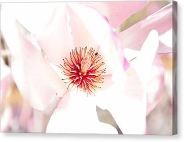 Spring Flower Blossoms Canvas Print