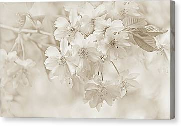 Canvas Print featuring the photograph Spring Flower Blossoms Soft Brown by Jennie Marie Schell