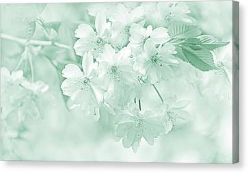 Canvas Print featuring the photograph Spring Flower Blossoms Teal by Jennie Marie Schell