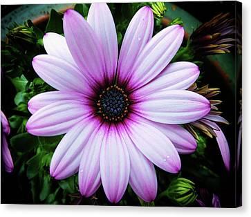 Spring Flower Canvas Print by Karen Stahlros