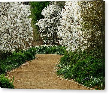 Spring Flowering Trees Wall Art Canvas Print