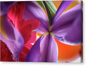 Spring Flowers 002 Canvas Print by Bobby Villapando
