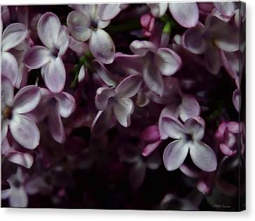 Spring Flowers 2 Canvas Print by Mikki Cucuzzo