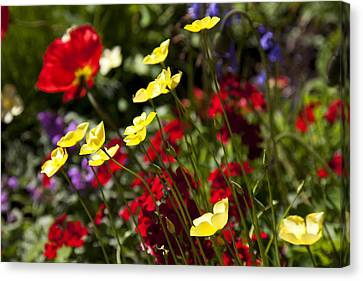 Flora Canvas Print - Spring Flowers by Garry Gay